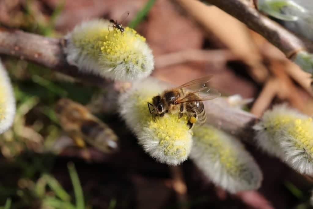 Naturnahe Gärten Hochwimmer Aktuelles Bienen